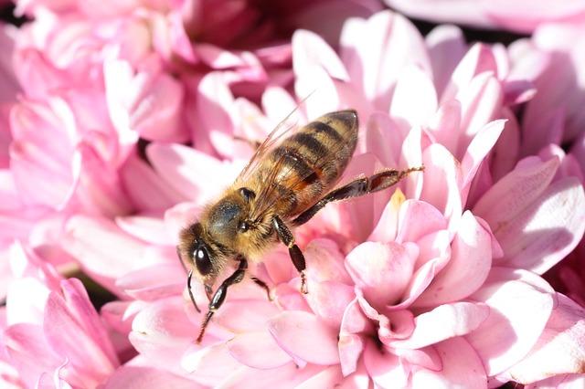 Rikkaruohoista eroon mehiläisiä myrkyttämättä